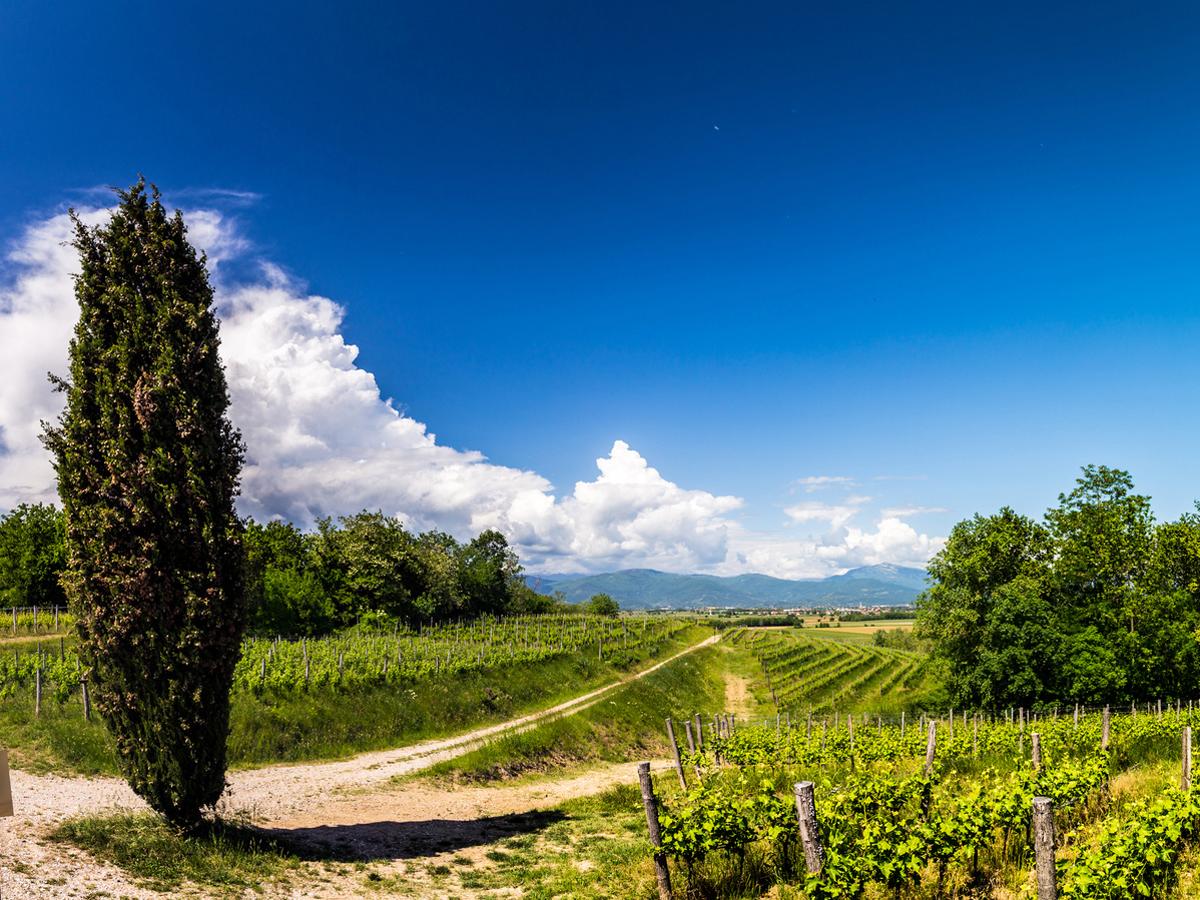Cose da fare in Friuli